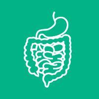 Diensten Nieren